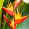 Nicaragua is home to several species of exotic colorful flowers